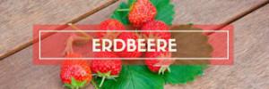 Erdbeer Rezept Sammlung