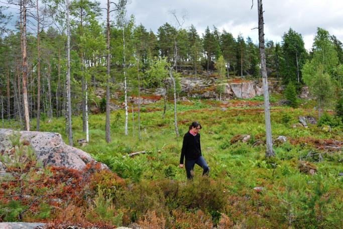 Blaubeeren sammeln in Schweden